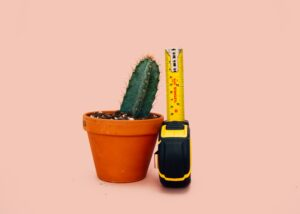 Cactus representing small penis size may benefit from Houston penis enlargement